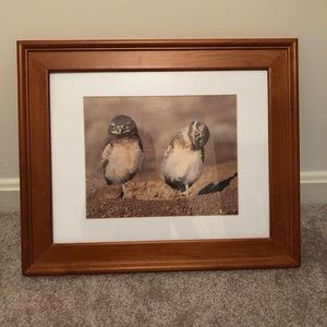 Cute owl photograph and wood frame